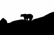 Siluett – Isbjörn
