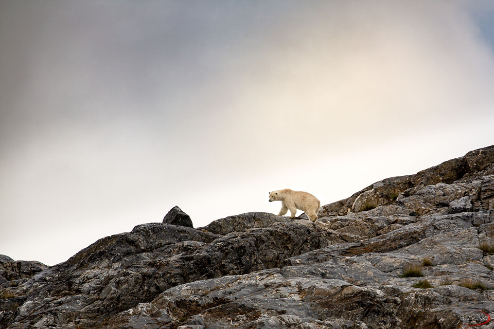 Mer Isbjörn – Svalbard